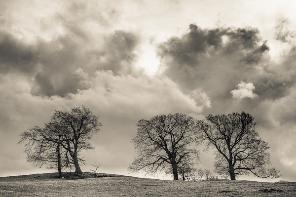 A view of three deciduous trees in front of a dramatic cloudy sky.