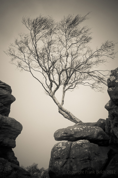 Birch tree growing on rocks.