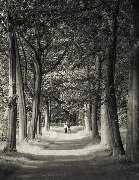 avenue of trees looking like the isle of a Church
