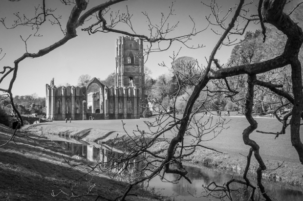 A picture of Fountains Abbey from a vantage point under a tree.