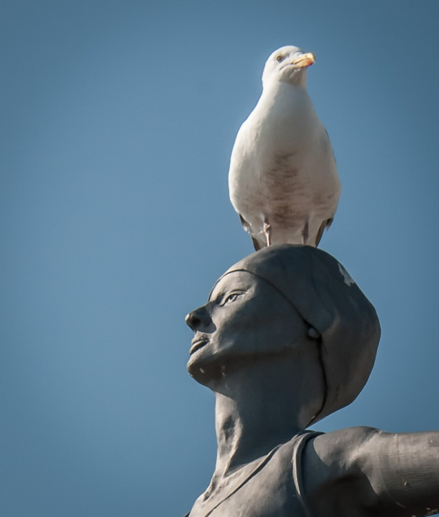 A Gull sitting atop a statue