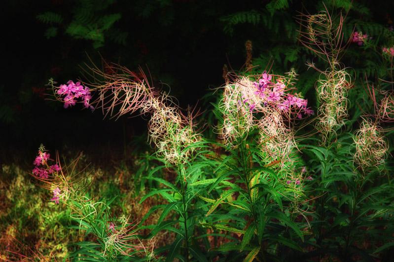 Fading woodland plants