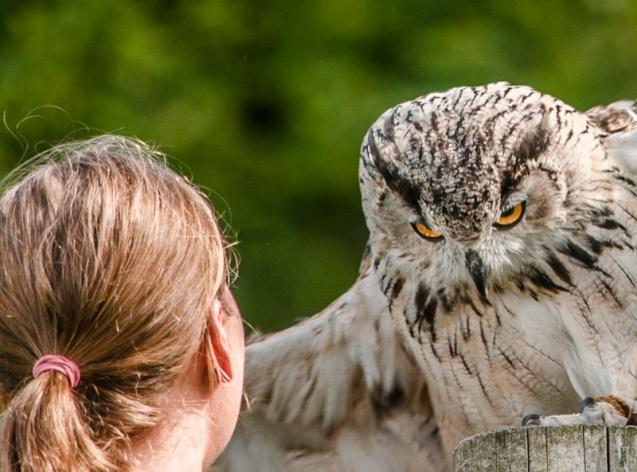 A close up of an owl's face