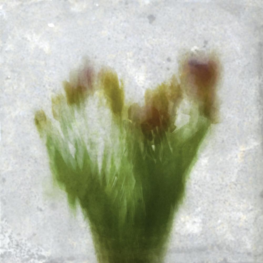 Impressionist tulips