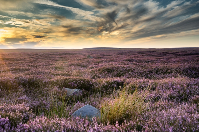 A view of the heather on Dallow Moor