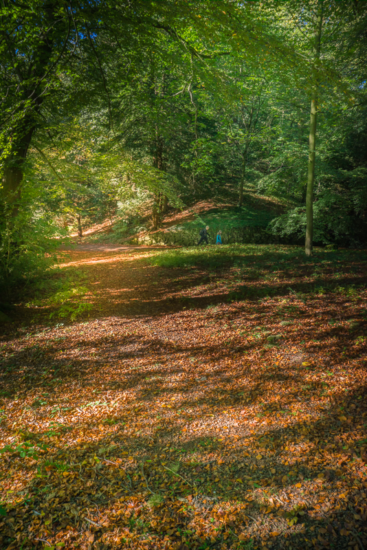 Autumn leaves carpeting the forest floor.