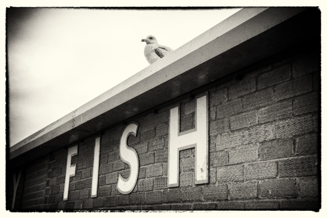 Picture of a gull above a Fish sign