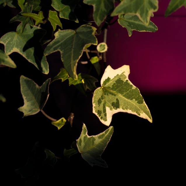 Weak winter sun on long suffering plants.
