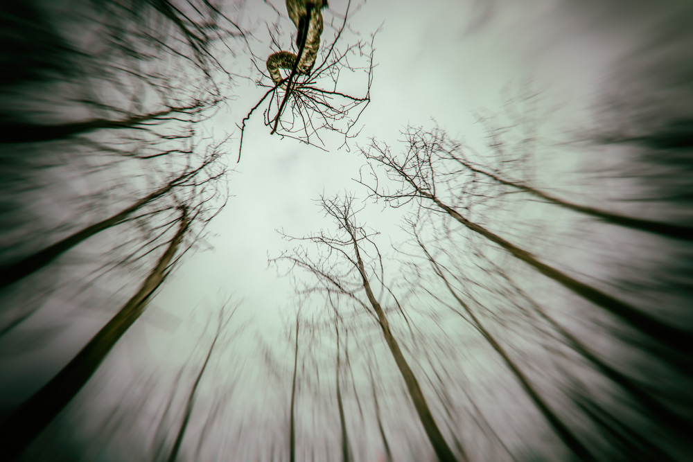 Looking up into the forest canopy.