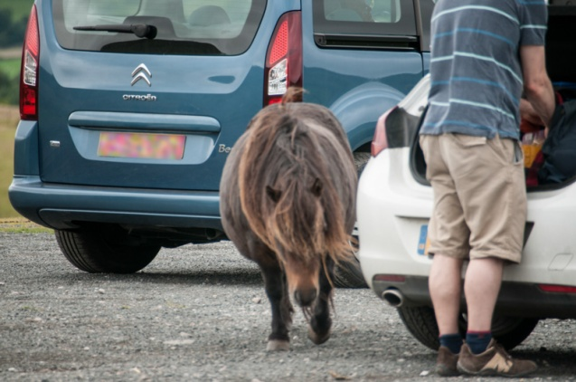 Scavanging ponies