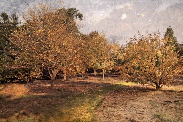 AutumnalArboretum