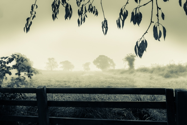 Misty Masham Fields.