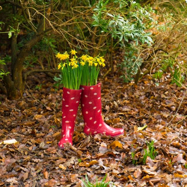 Daffodils in Wellies.