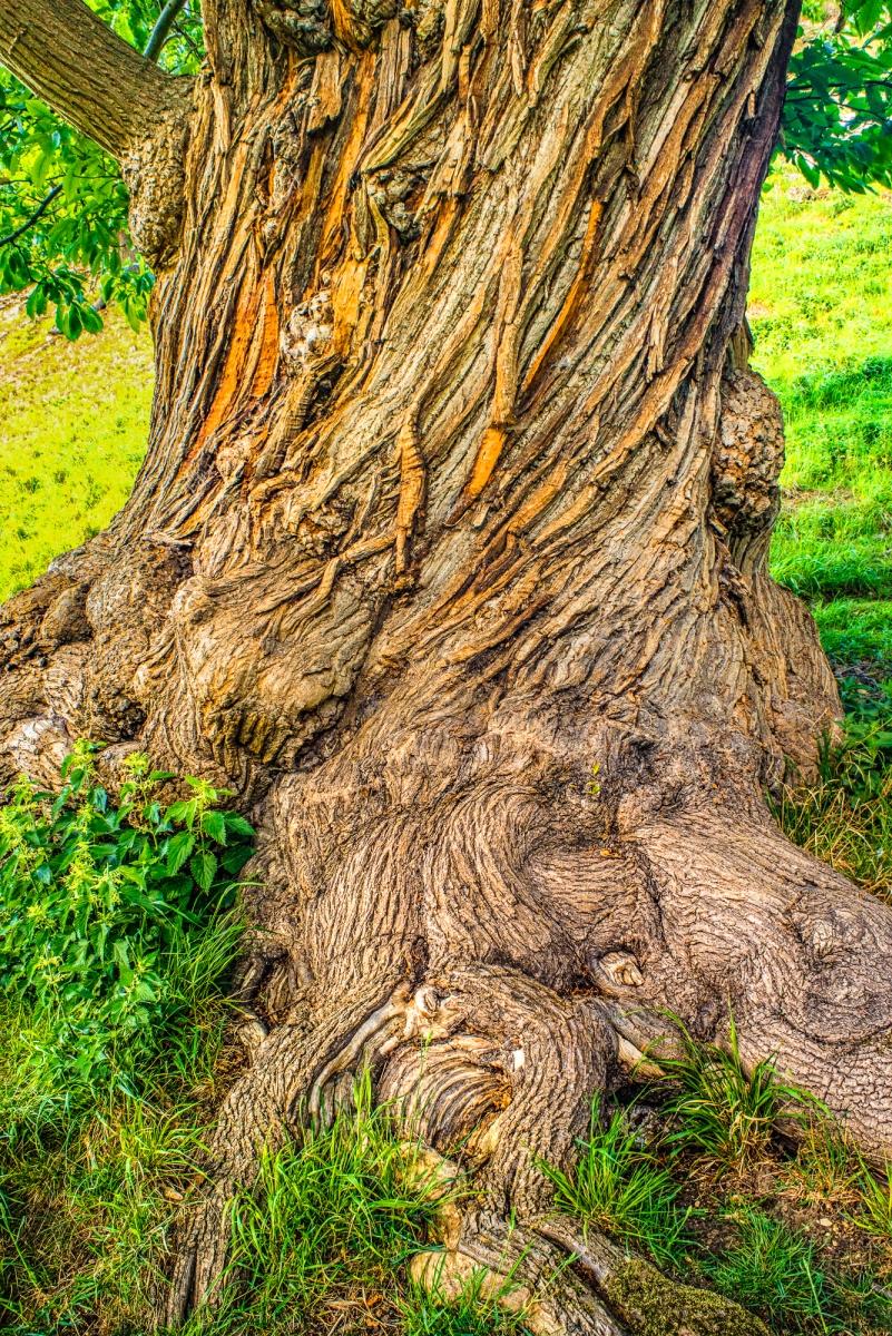 Gnarly Tree Texture