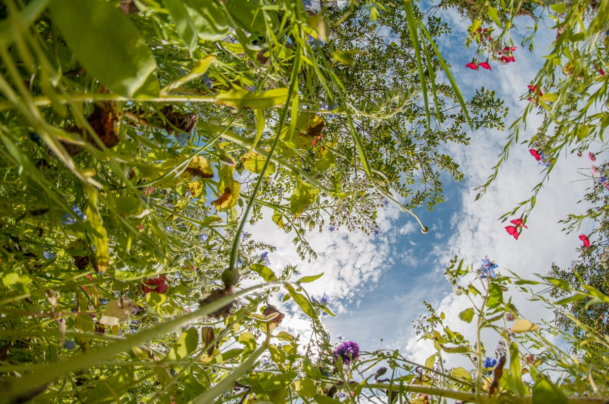 Bugs eye view of wild flower meadow.